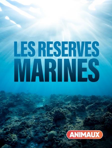 Animaux - Les réserves marines