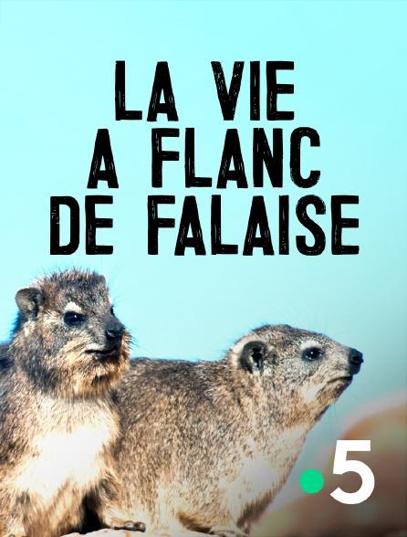 France 5 - La vie à flanc de falaise