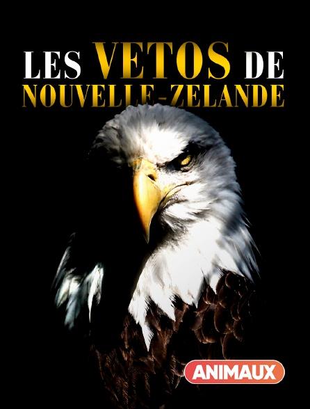 Animaux - Les vétos de Nouvelle-Zélande