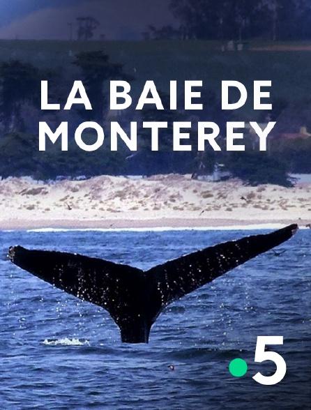 France 5 - La baie de Monterey