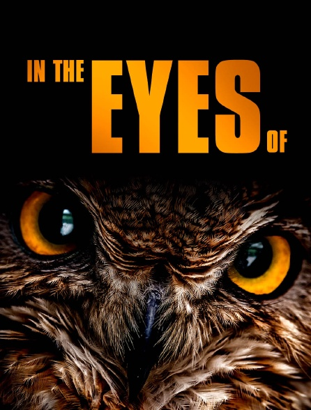 In the Eyes of
