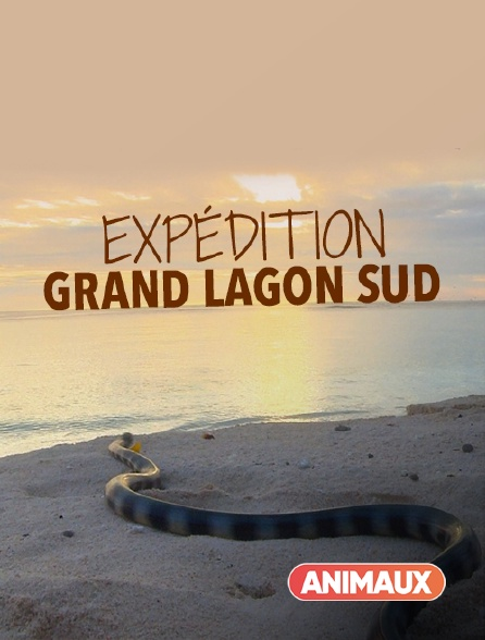Animaux - Expédition Grand Lagon Sud