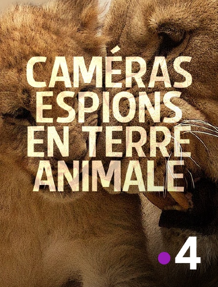 France 4 - Caméras espions en terre animale