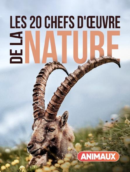 Animaux - Les 20 chefs-d'oeuvre de la nature
