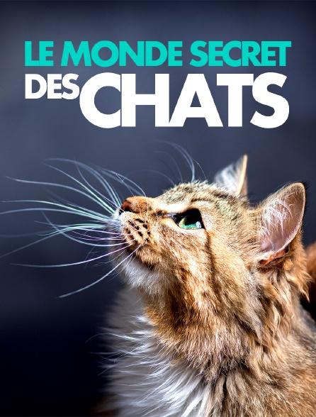 Le monde secret des chats