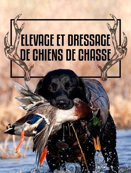 Elevage et dressage de chiens de chasse