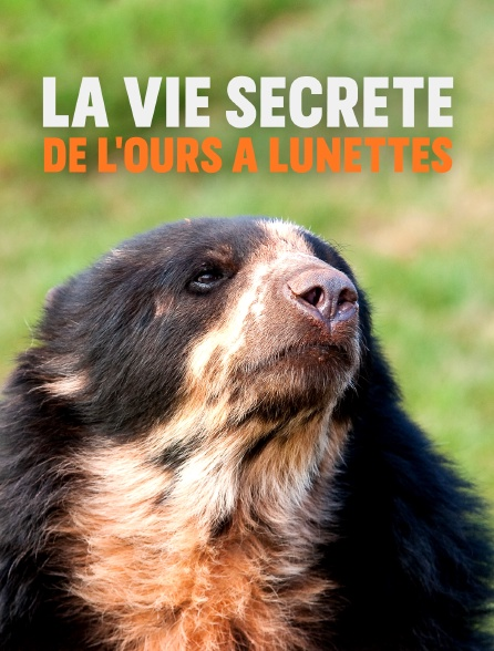 La vie secrète de l'ours à lunettes