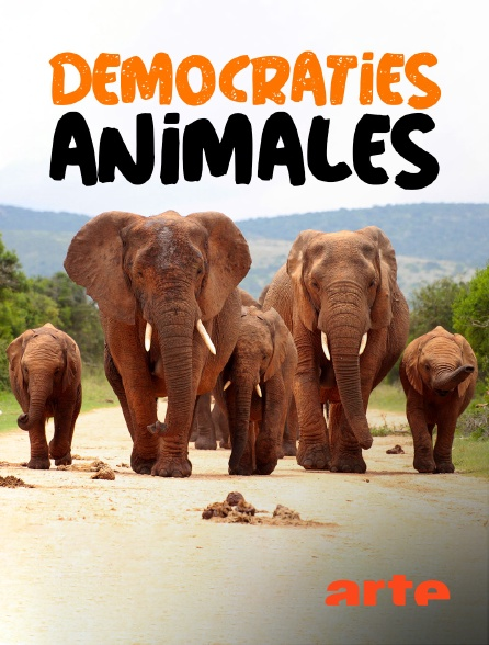 Arte - Démocraties animales
