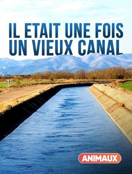 Animaux - Il était une fois un vieux canal