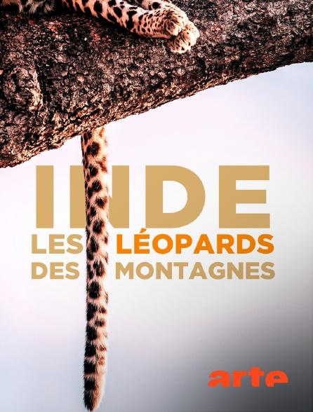 Arte - Inde : les léopards des montagnes