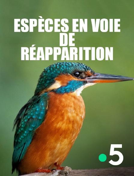 France 5 - Espèces en voie de réapparition