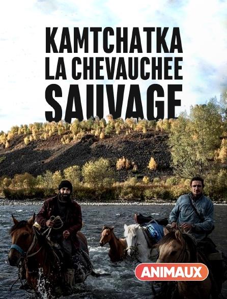 Animaux - Kamtchatka, la chevauchée sauvage