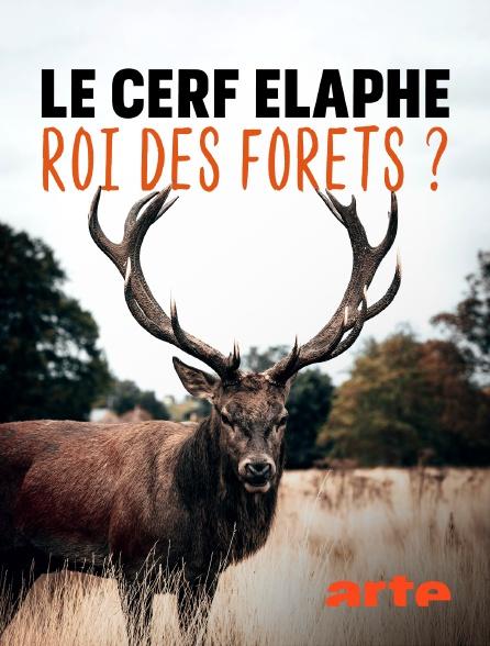Arte - Le cerf élaphe, roi des forêts ?