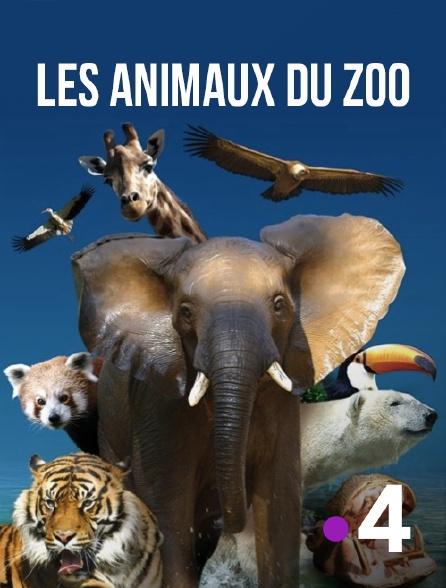 France 4 - Les animaux du zoo