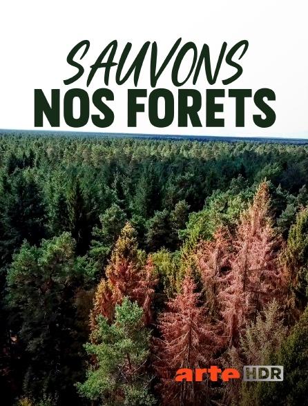Arte HDR - Sauvons nos forêts