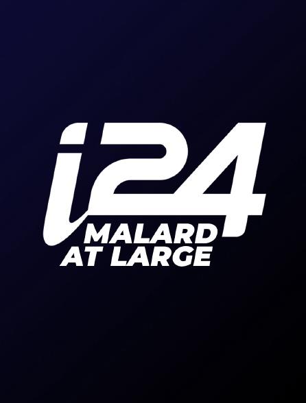 Malard at Large