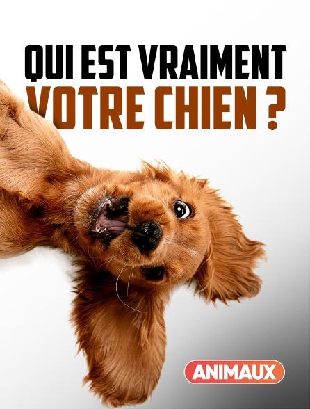 Animaux - Qui est vraiment votre chien ?