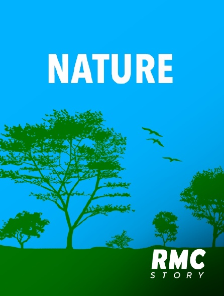 RMC Story - Bretagne : alerte tempêtes