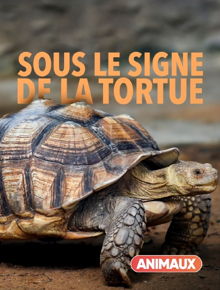 Animaux - Sous le signe de la tortue