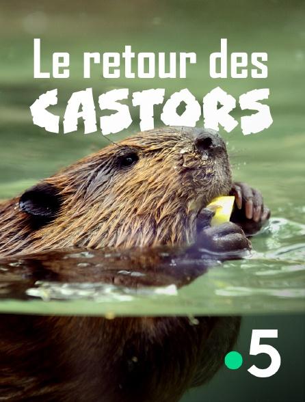France 5 - Le retour des castors
