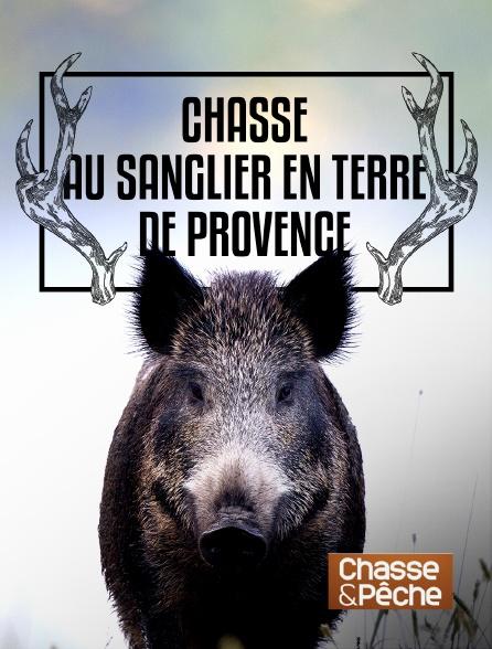 Chasse et pêche - Chasse au sanglier en terre de Provence