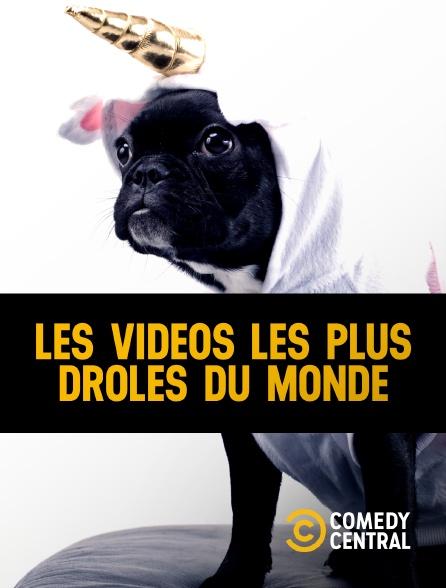 Les Videos Les Plus Droles Du Monde En Streaming Sur Comedy Central Molotov Tv