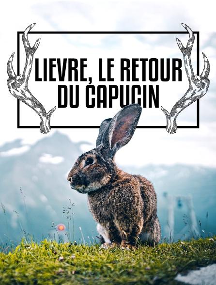 Lièvre, le retour du capucin