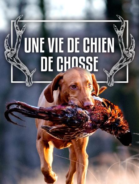 Une vie de chien de chasse