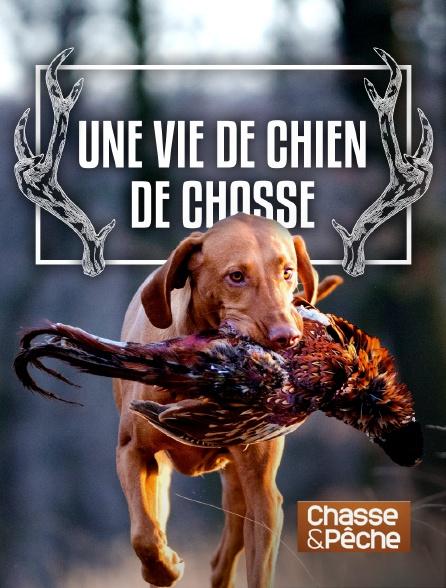 Chasse et pêche - Une vie de chien de chasse