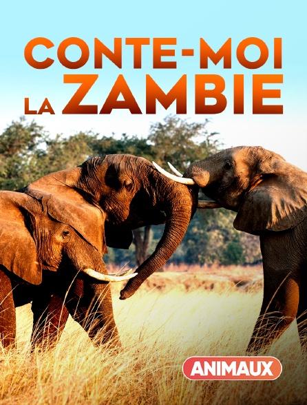 Animaux - Conte-moi la Zambie