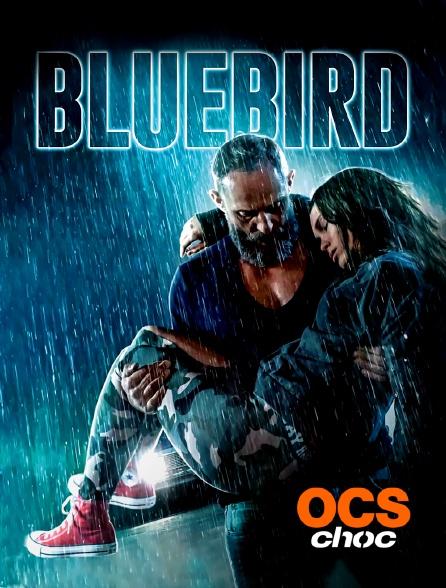 OCS Choc - Bluebird