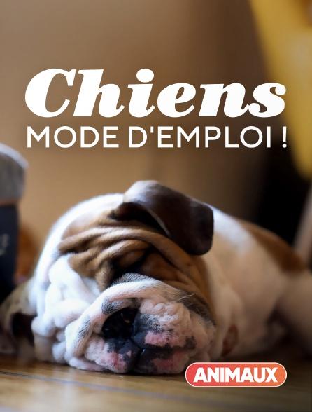 Animaux - Chiens : mode d'emploi !