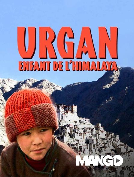 Mango - Urgan, enfant de l'Himalaya