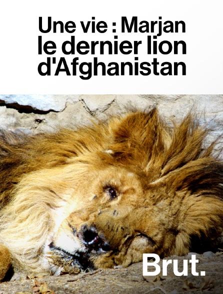 Brut - Une vie : Marjan, le dernier lion d'Afghanistan