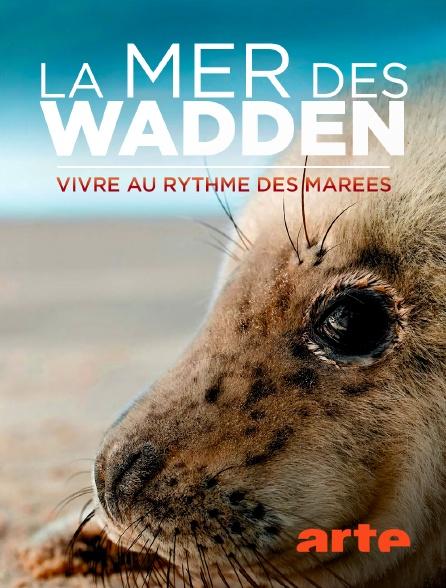 Arte - La mer des Wadden : Vivre au rythme des marées