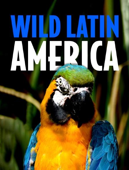 Faune d'Amérique Latine