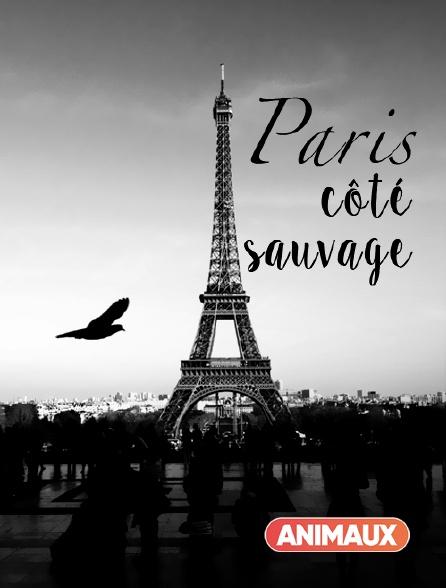 Animaux - Paris côté sauvage