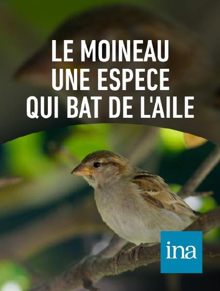 INA - Le moineau domestique