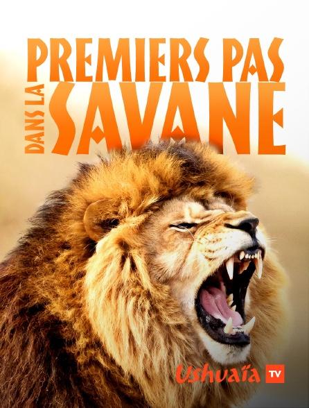 Ushuaïa TV - Premiers pas dans la savane