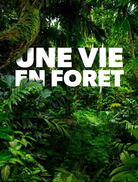 Une vie en forêt