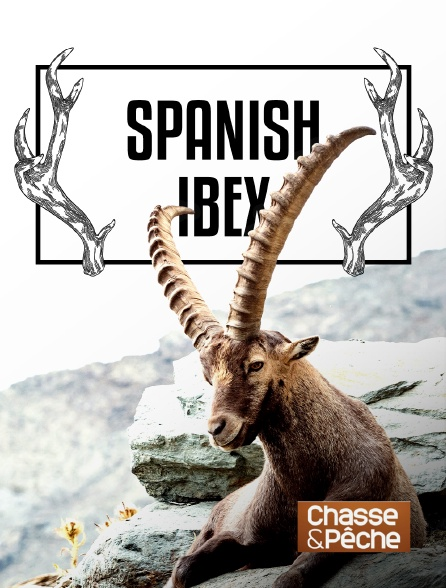 Chasse et pêche - Spanish ibex