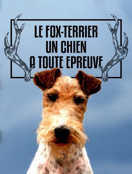 Le fox-terrier : un chien à toute épreuve