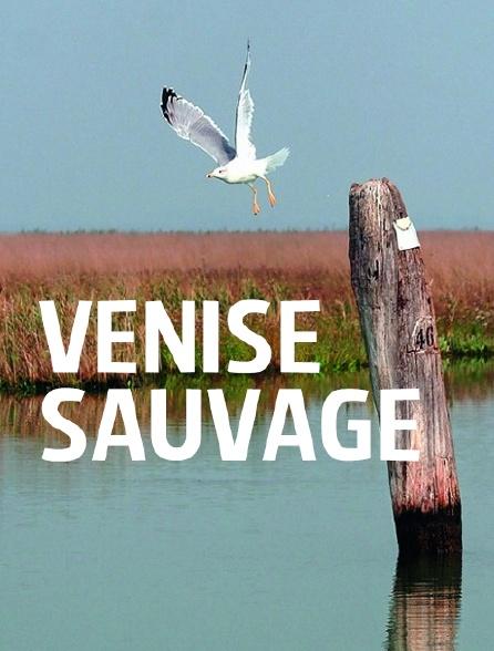 Venise sauvage