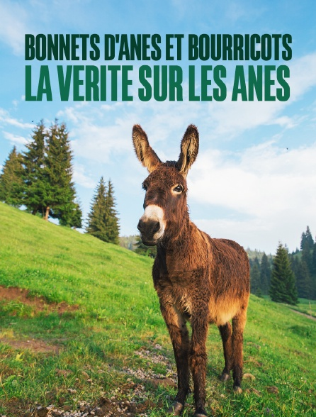 Bonnets d'ânes et bourricots, la vérité sur les ânes