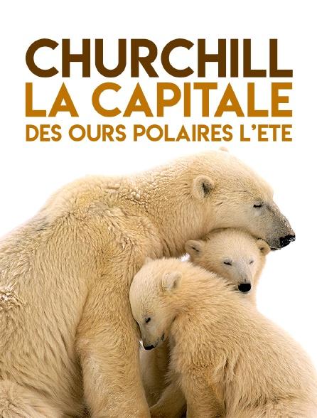 Churchill, la capitale des ours polaires