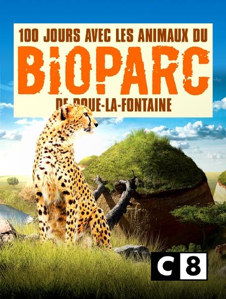 C8 - 100 jours avec les animaux du Bioparc de Doué-la-Fontaine