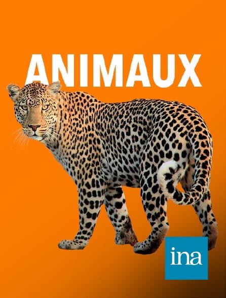 INA - Accord entre la Chine et la France pour le prêt de deux pandas