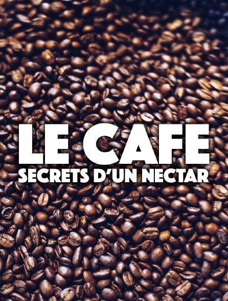 Le café : secrets d'un nectar