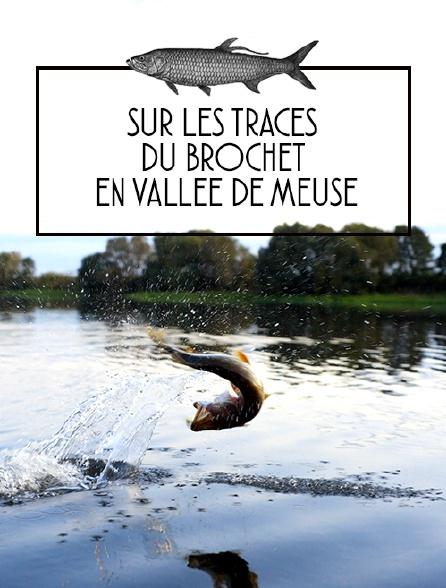 Sur les traces du brochet en vallée de Meuse