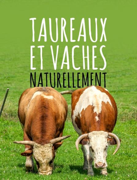 Taureaux et vaches, naturellement